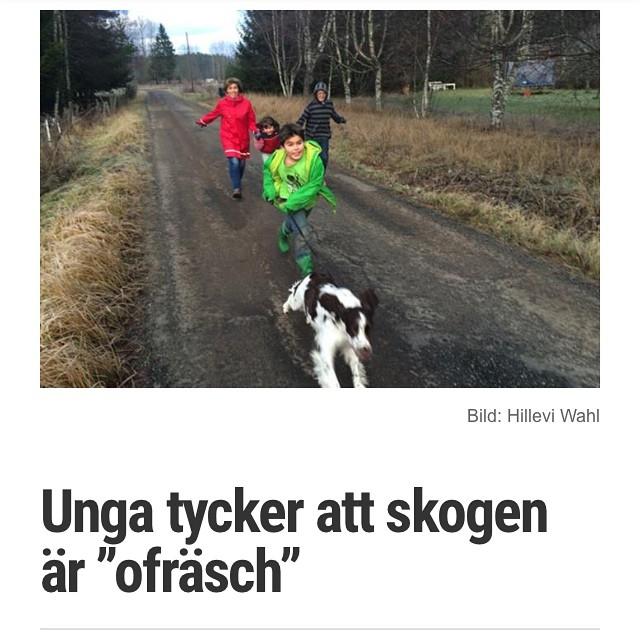Skogen är världens bästa och största träningslokal! http://www.vardagspuls.se/bloggar/hillevi-wahl/unga-tycker-att-skogen-ar-ofrasch/