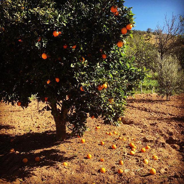 Apelsinerna. Blommorna. Dofterna!