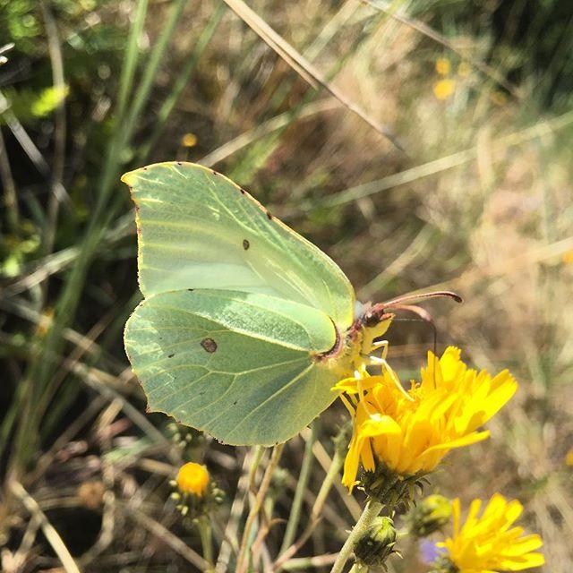 Alla dessa fantastiska fjärilar. Som virvlar omkring varandra här. Jag blir lite lycklig bara av det.