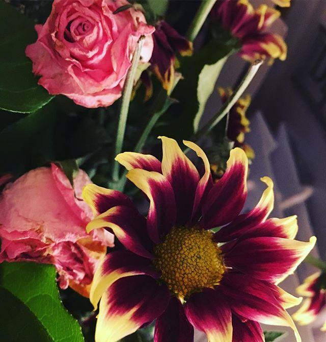 Ännu blommar de. Mina vackra blommor från releasefesten. Tack alla underbara människor.