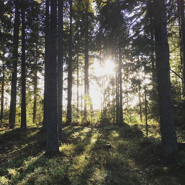 Ser ni hur ljuset formar ett hjärta i träden?