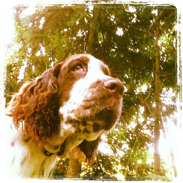 Hunden och skogen.