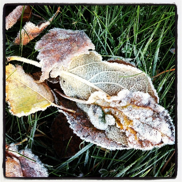Frost.
