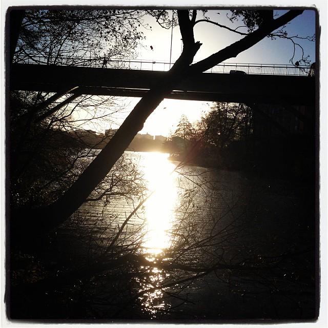 Morgonpromenad. Samlar ljus i hjärtat och hjärnan. Är tacksam över att jycken tvingar mig ut.