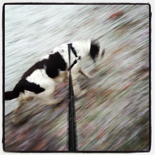 Vivi jagar snöflingor. Livets första snö. Stort!