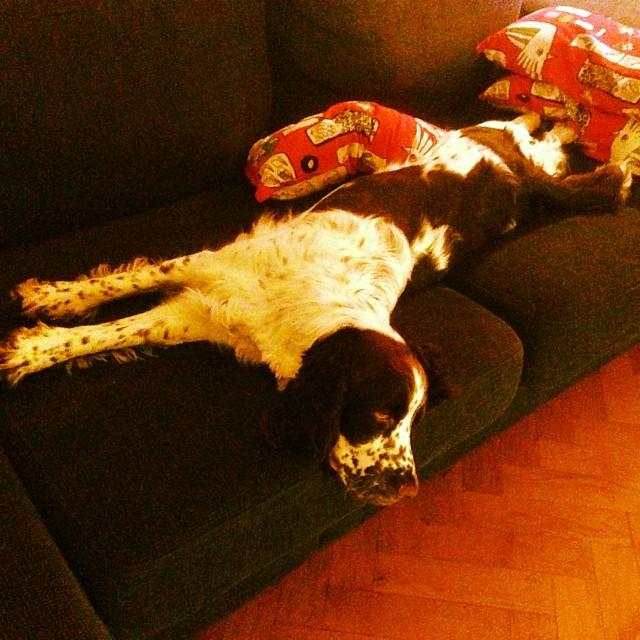 Konsten att ockupera hela soffan. Det har varit lite körigt i dag.