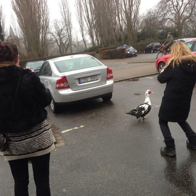 Sanna och Ann-Linn plåtar fulsöt fågel.