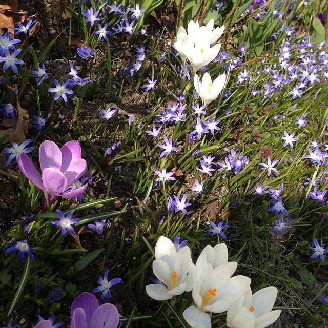 Våren!