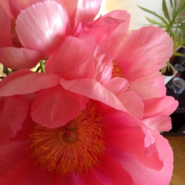 Vackra blommor man får. Tacksamhet.