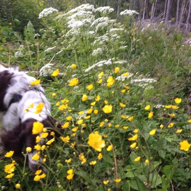 Bland blommor och bin.
