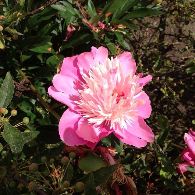 Schysst blomma.
