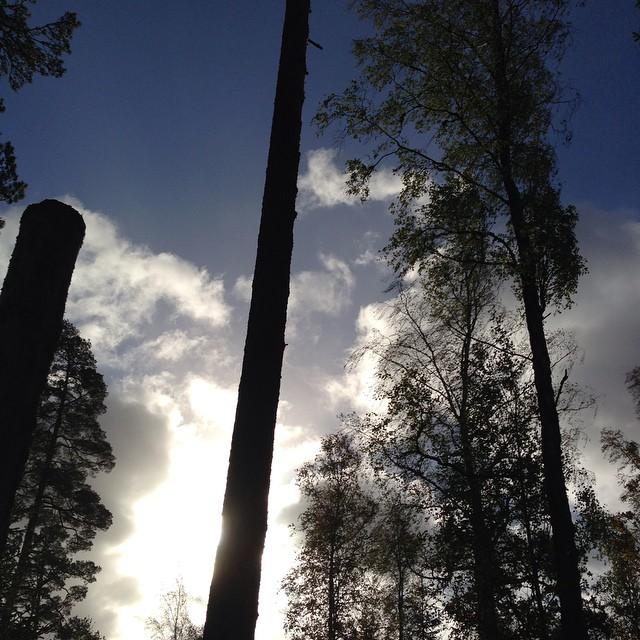 Skog och himmel och sol.