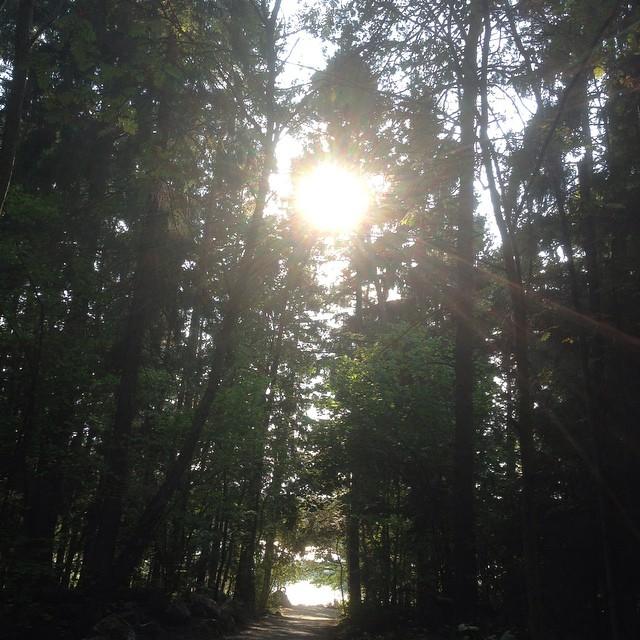 Skogen. Ljuset. Lugnet.
