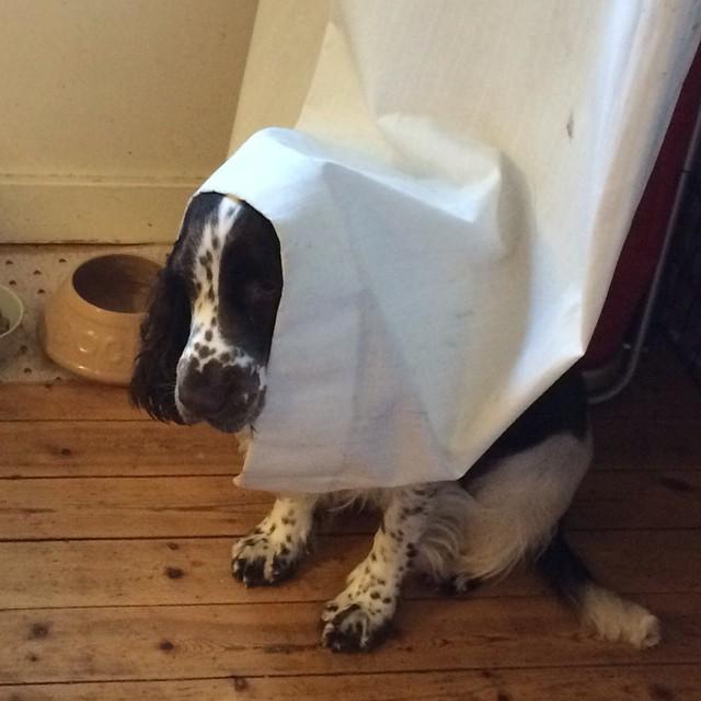 Jag gömmer mig här tills du har dammsugit klart.