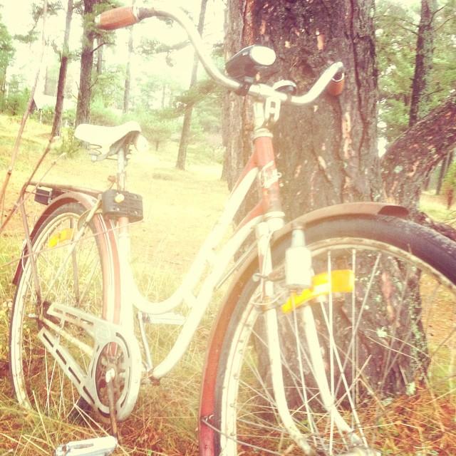 Cykellycka.