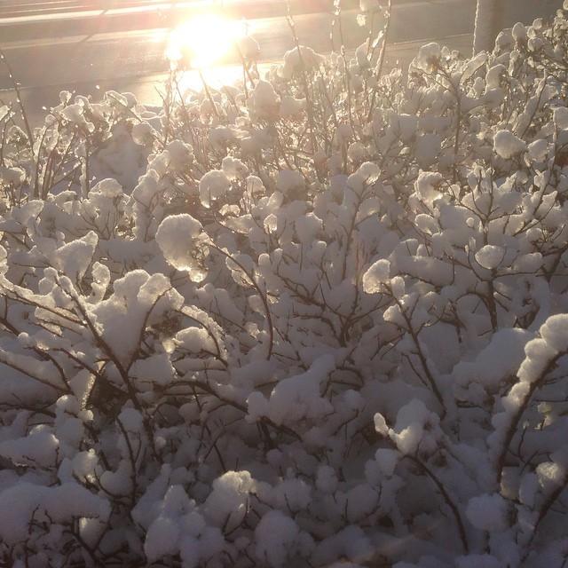 Snö. Is. Sol.