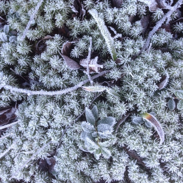 Frost. Vackert.