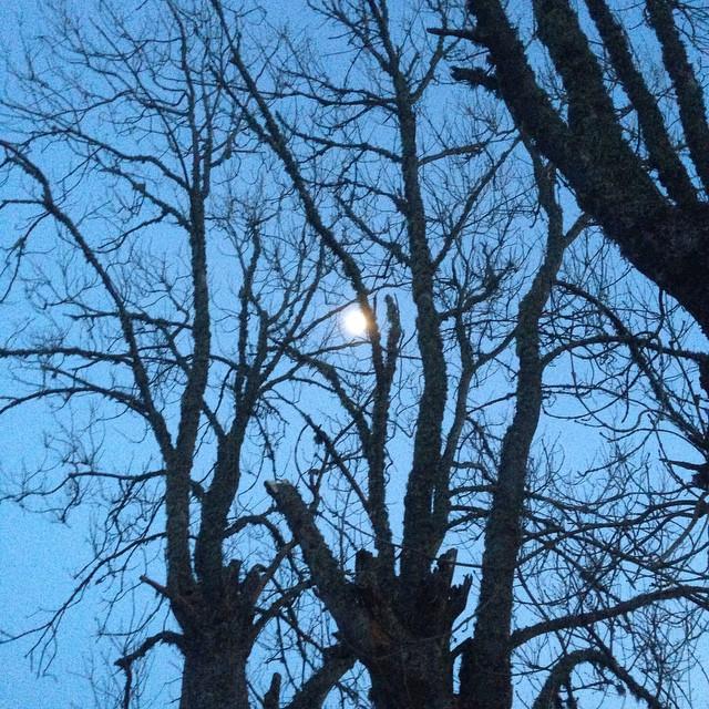 Långpromenad i månens sken. No streetlights. Älskar lugnet.
