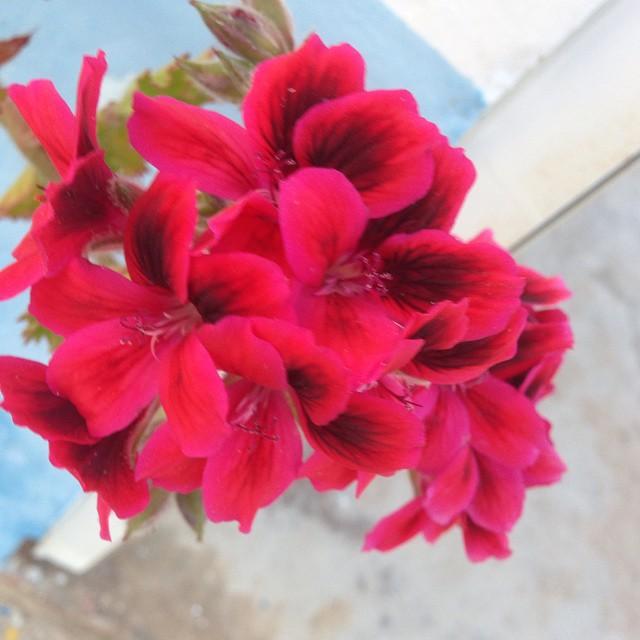Röd blomma.