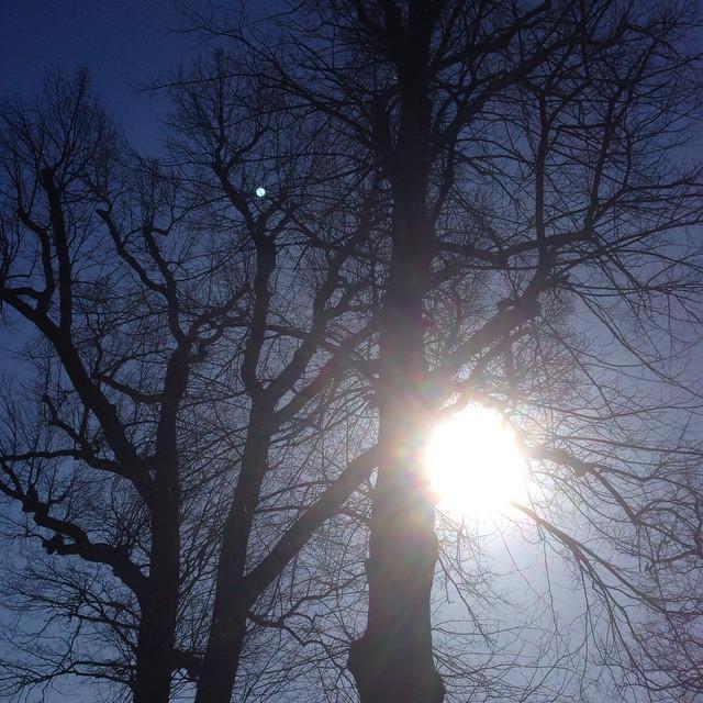 Träden! Ljuset. Naturen. Andas.