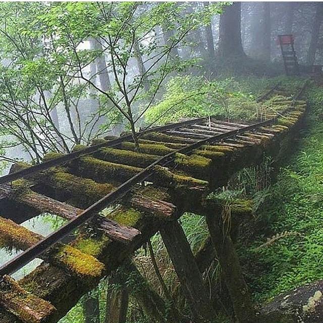 Trail! Reinsta @theglobewanderer