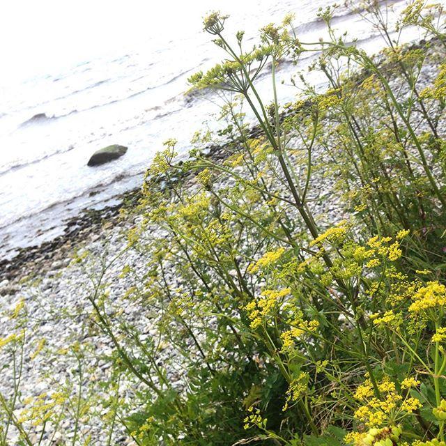 Jag minns. Nu minns jag. Somrarna i Skåne. Havet. Blåsten. Stenarna. Blommorna. Dofterna.