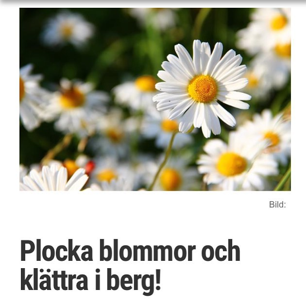 Ett av mina favoritpoem. http://www.vardagspuls.se/bloggar/hillevi-wahl/plocka-blommor-och-klattra-i-berg/