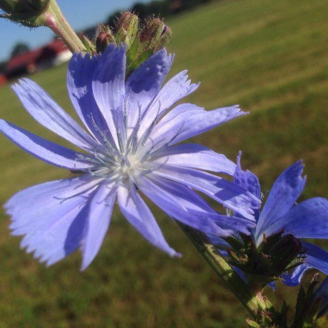 Vad är det här för blomma då? Ni som vet allt.