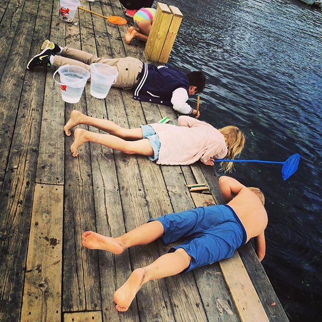 Medan jag springer som ett jehu så har barnen äventyrsläger. Med krabbfiske och kajakpaddling och annat skoj. Bra grej.