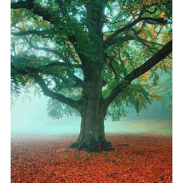 Älskar ni också träd? Kolla in kontot @tree_brilliance - bara träd och mera träd och ännu mer vackra träd. Mindfulness på riktigt.