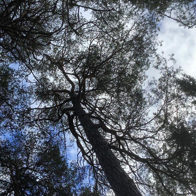 Lyft blicken. Älskar trädkronorna. Himlen. Luften.