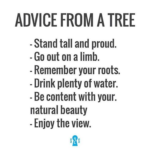 Några tips från ett träd.