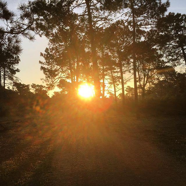 Morgonjogg och stavgång genom skogen. Tidvattnet var för högt på stranden. Fågelsång och varma dofter. Träd.