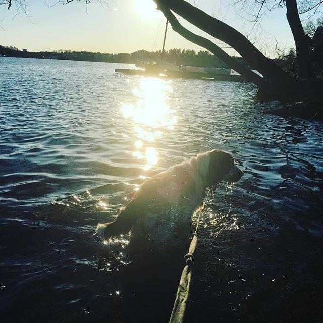 Hunden i vattnet.