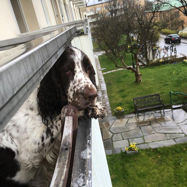 Hundväder! Tycker Vivi.