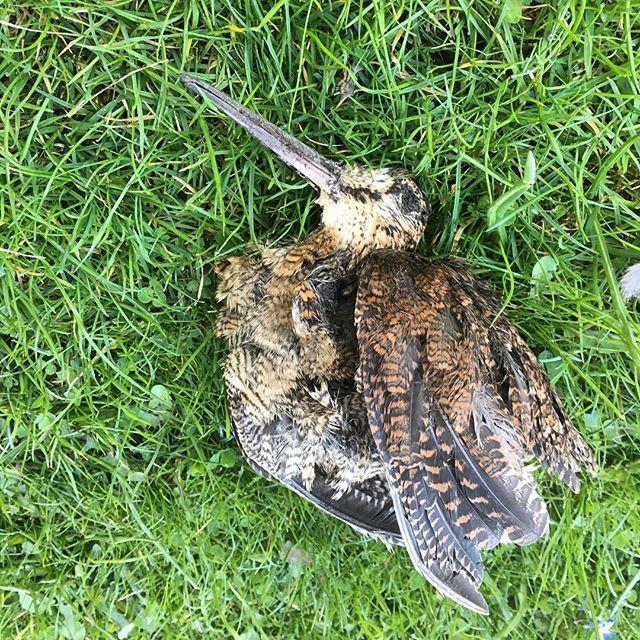 Vad var det här för sorts fågel? I salig åminnelse.