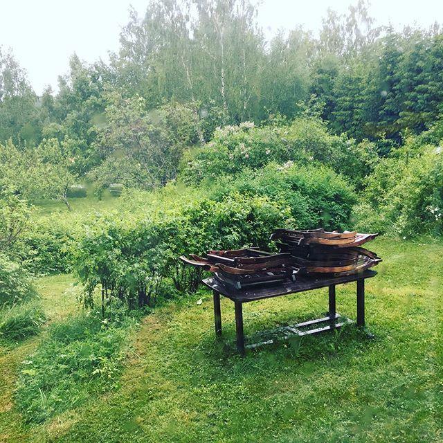 Vi klippte gräset i går - bara där fick jag 10 000 steg. Sedan kom regnet. Nu vill inte ens hunden gå ut. Jag dricker kaffe och spånar fram en ny barnbok. Vad gör ni?