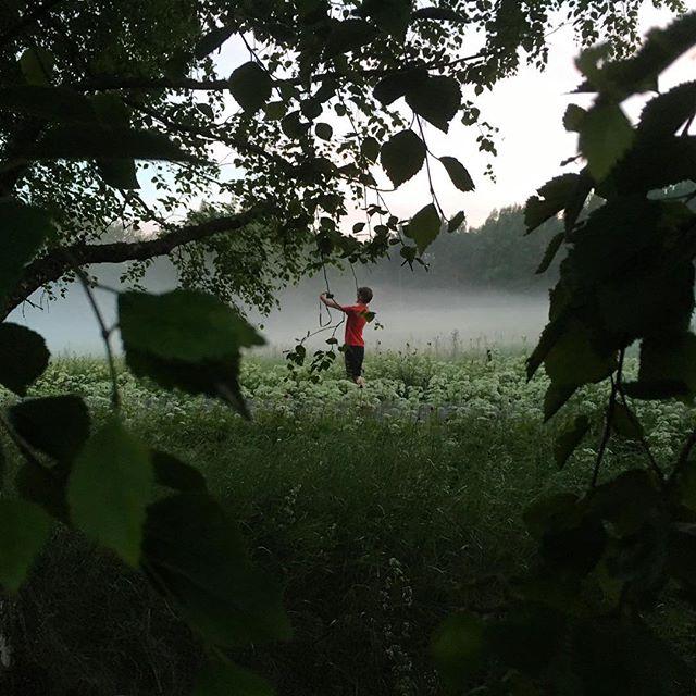 Kvällsfotografen är inne i dimman. @specielliot
