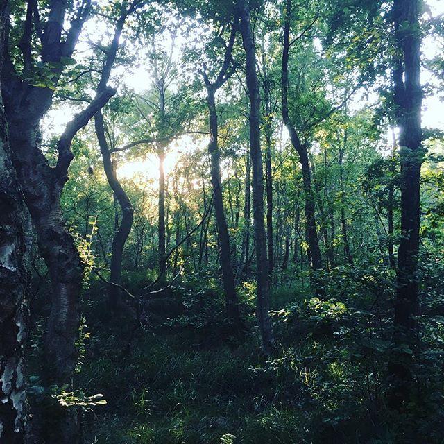 The woods. Springrundan gick in i skogen i dag. Fötterna tackade så mycket.