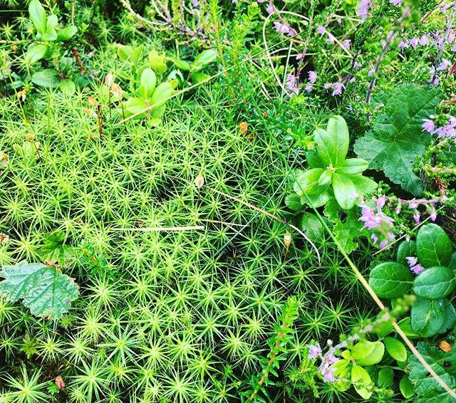 Naturen. Alltid lika amazing i sina små, små detaljer.