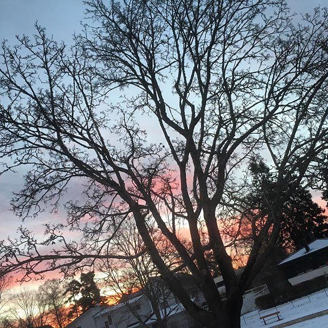 God morgon! Fåglarna kvittrar och det är nästan ljust!