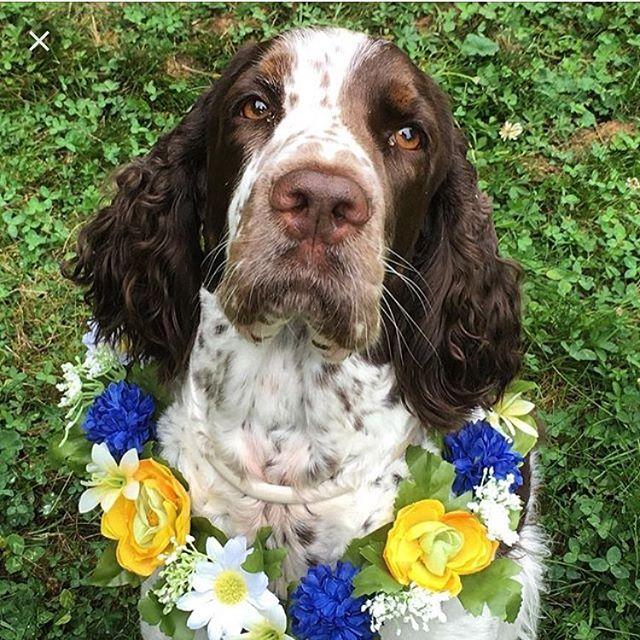 Hurra för världens finaste hund, lillasyrra, busunge och springkompis. I dag fyller Vivi fyra år.