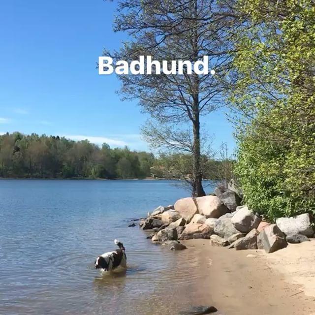 Glad badhund.