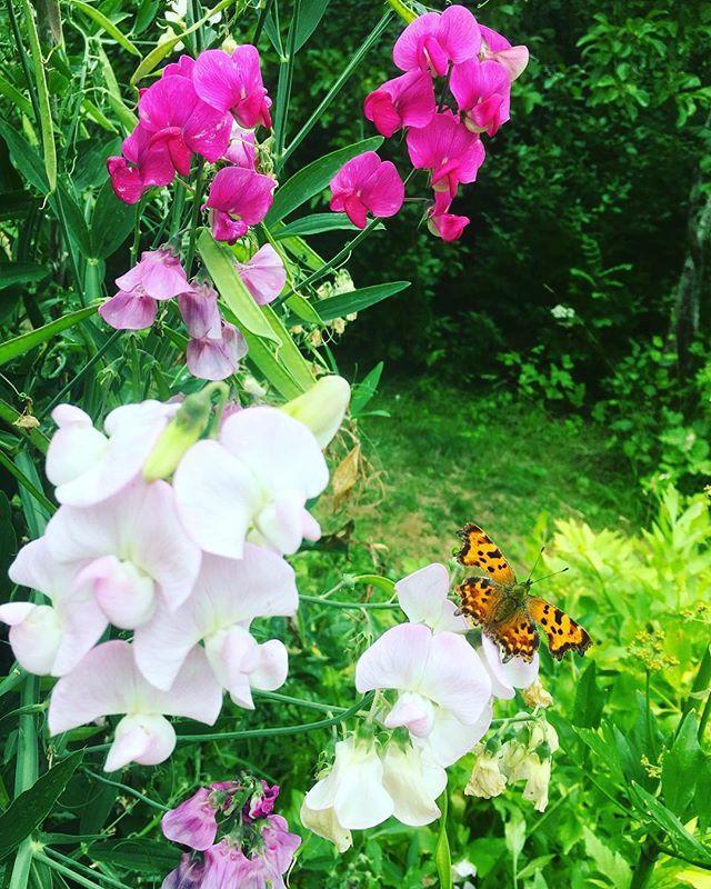 Alla dessa blommor och fjärilar.