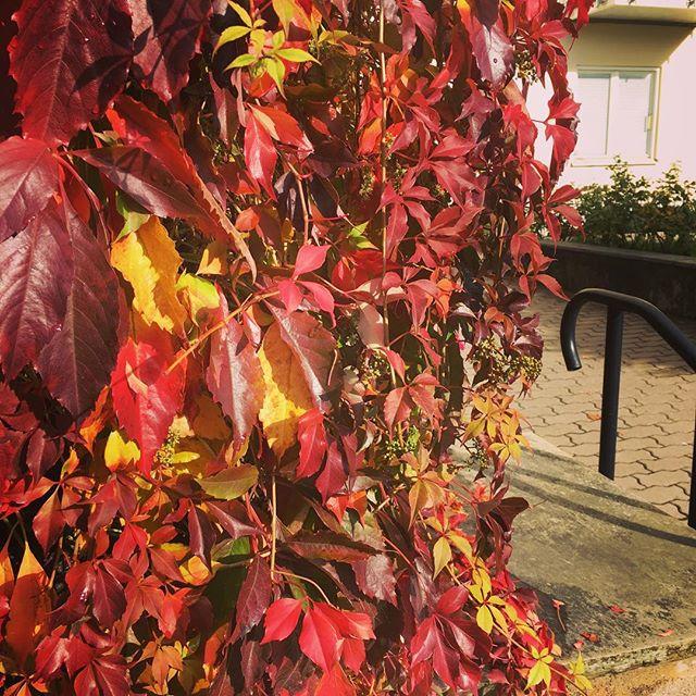 Höstens färger. Det finns något så vilsamt vackert eldigt i dem. Kan stå och titta och bara förundras.