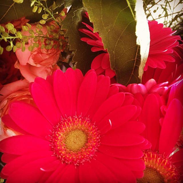 Njuter fortfarande av mina vackra blommor från releasefesten. Och undrar lite vad för kul som ska hända i dag. Vad tror ni - vad ska hända för roligt?