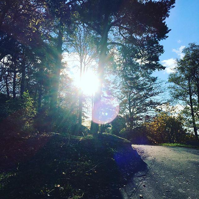 En till. Träd. Dessa mäktiga väsen. Och solen som en superkraft som bryter sig igenom allt. Stigen uppåt. Vi kan tycka att vi stundtals går runt i cirklar. Men vägen framåt är en spiral som strävar uppåt, uppåt. Livet.