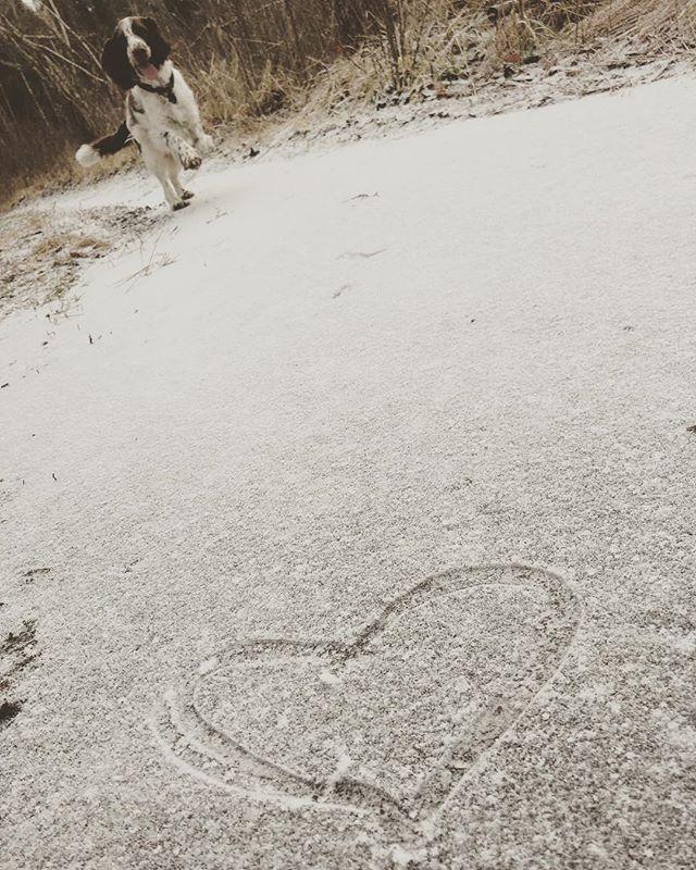 Glad hund på hal is.