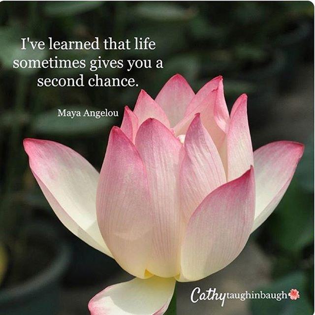 ️ Maya Angelou.