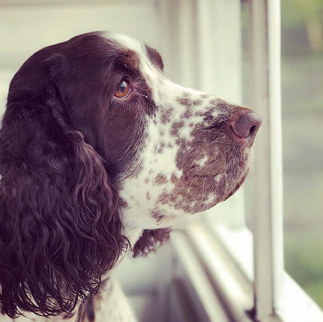 Vivi. ️ Hundar har en själ.